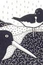 Pen and Ink Drawing of Stylised Birds - Oystercatchers